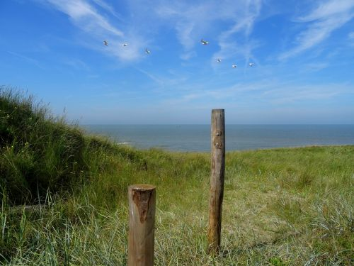 north sea beach dune