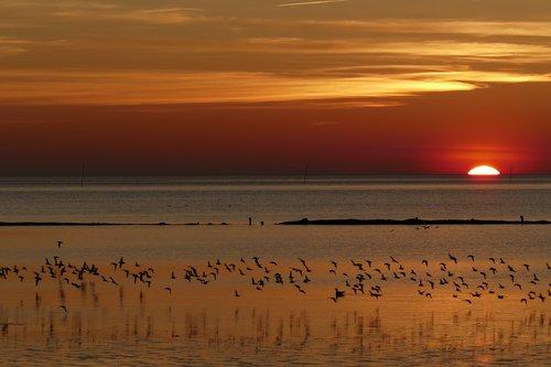 north sea  wadden sea  mecklenburg