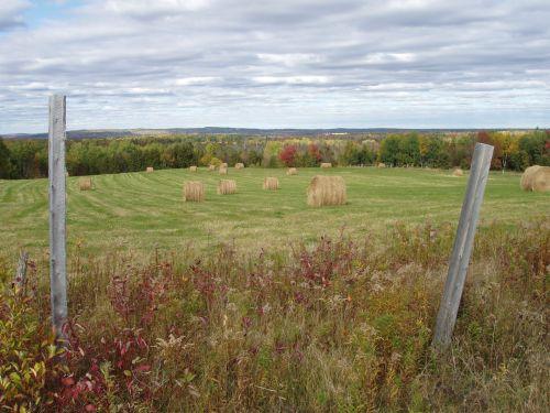Northern Maine Field
