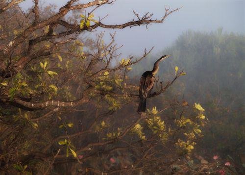 northern territory bird nature