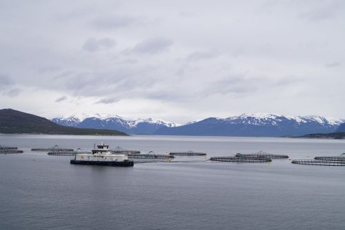 norway salmon farming norwegian sea