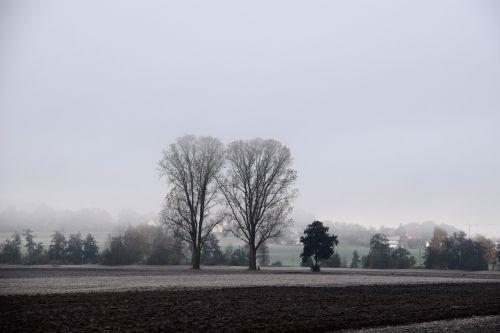 november trees landscape