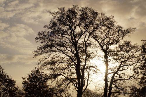november mood landscape