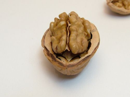 nut walnut half nut