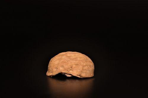 nut walnut cut in half