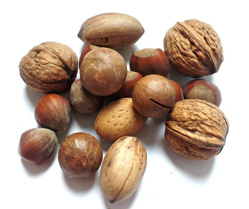 nut walnut brazil nut
