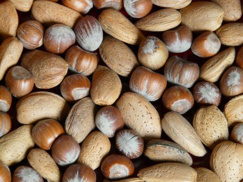 nuts almonds hazelnuts