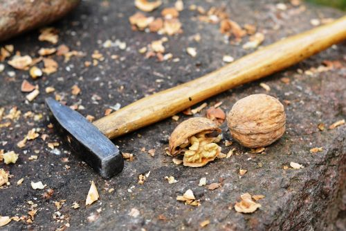 nuts walnut hammer