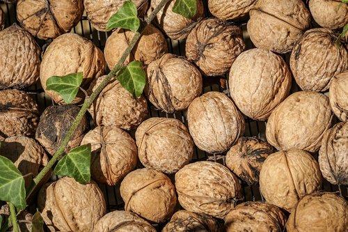nuts  tree nuts  walnut