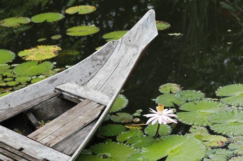 nymphaea alba pond lotus