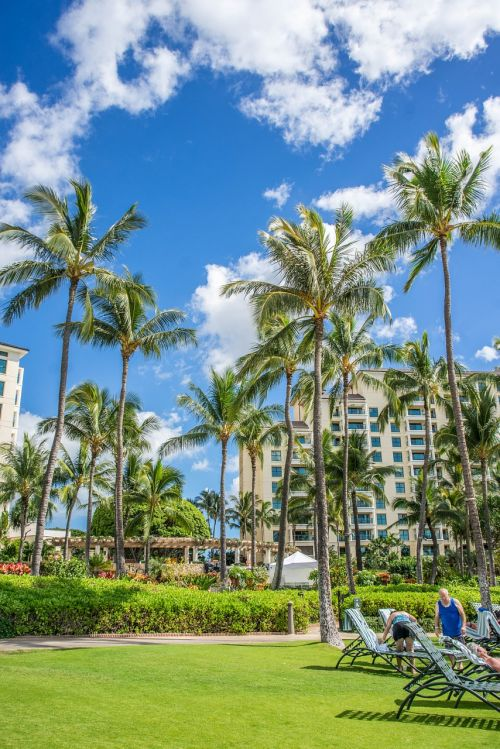 oahu,ko olina,hawaii,palm trees,beach,landscape,tropical,clouds,sky,architecture,nature,summer,travel,outdoor,summer landscape,scenic,nature landscape,beautiful landscape,tropic