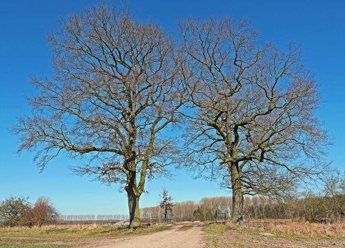 oak solitaire wintry