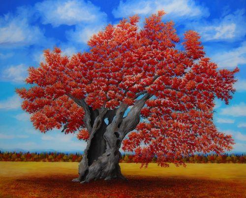 oak rossa quercus