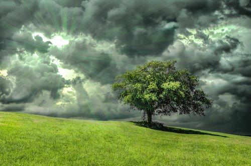 oak  tree  grass