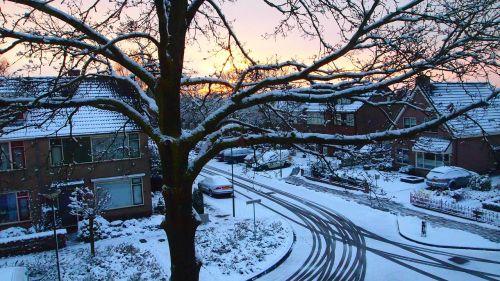 oak oak tree snowy
