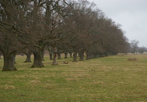 oak oak trees tree