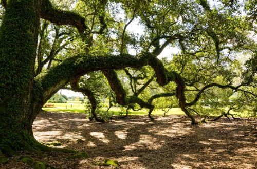 oak alley plantation usa america