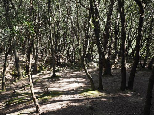 oak forest trees stone oak