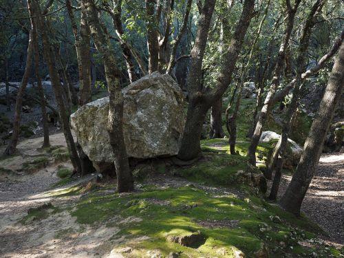 oak forest rock limestone