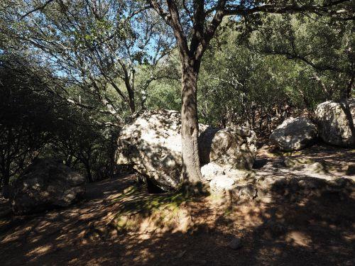 oak forest rock limestones
