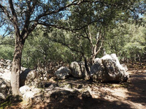 oak forest trees rock