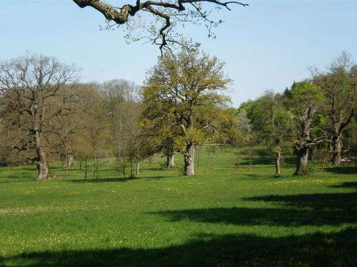 oak grove oak trees