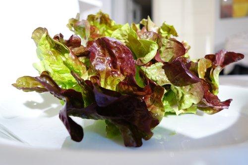 oak leaf lettuce  salad  healthy
