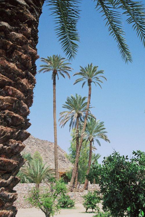 oasis desert vegetation