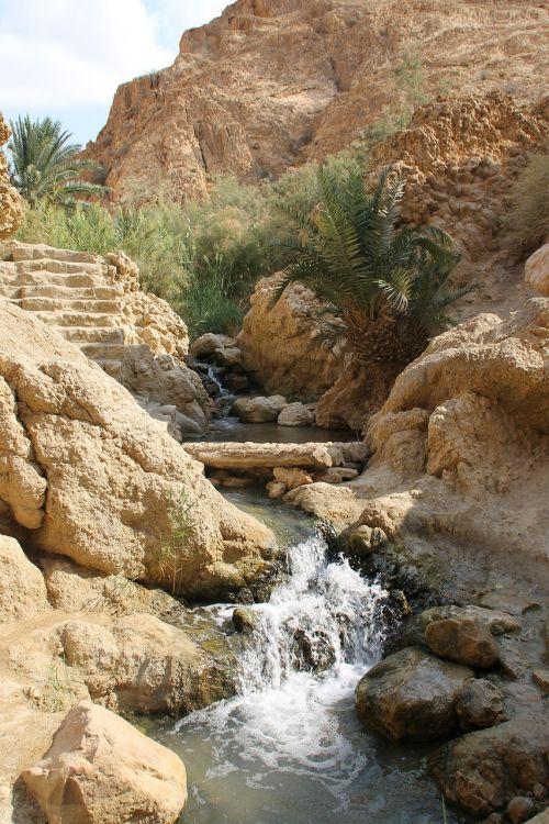oasis tunis africa