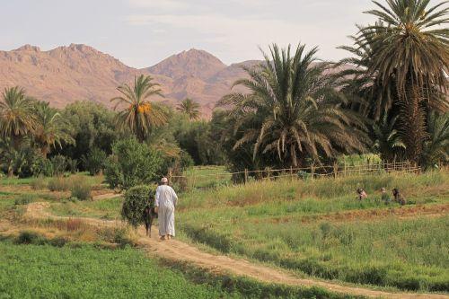 oasis tinerhir marroc joins juncadella at
