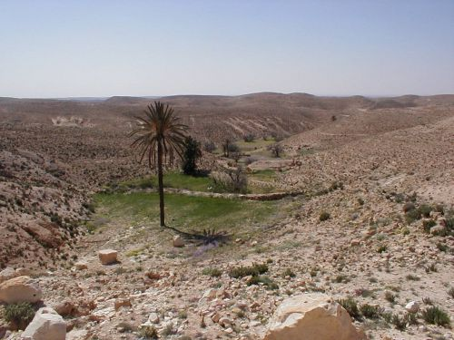 oasis shott el djerid southern tunisia