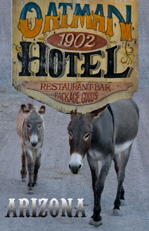 travelposter,modernposter,travelposters,america,usatravel,state,destinations,arizona,oatman,oatman arizona travel poster