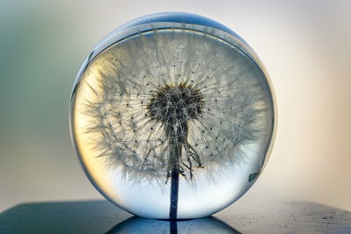 object  glass ball  dandelion