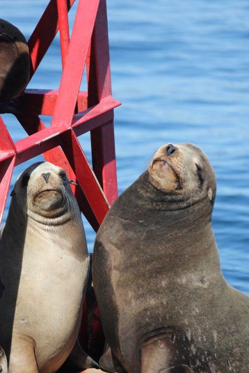 seals ocean mammal