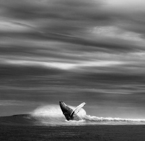 ocean sea wave