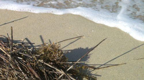 ocean seaweed surf