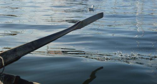 ocean fjord rowing