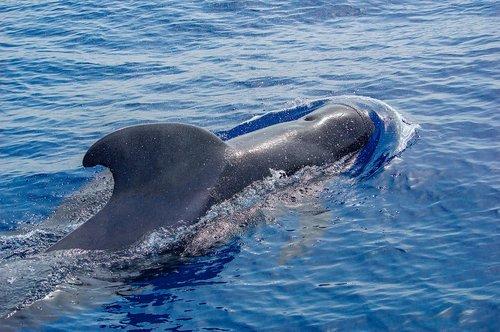 ocean  dolphin  sea