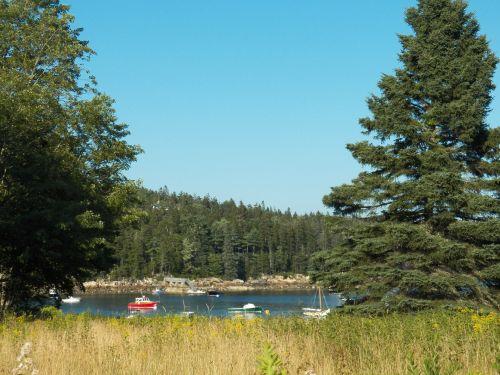 Oceanside Meadow