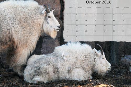 October 2016 Calendar Of Goats