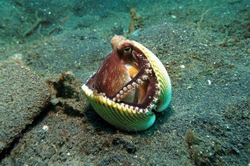 octopus behavior underwater