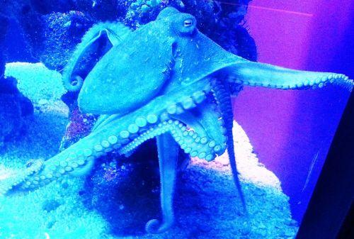 octopus kraken sea life