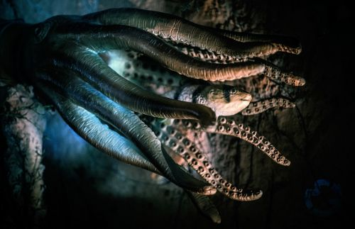 octopus fish deep sea
