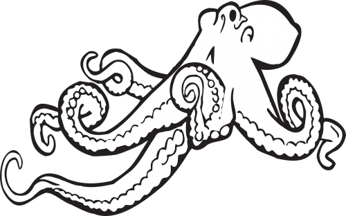 octopus sea animal