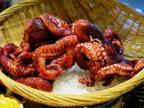 octopus seafood sea