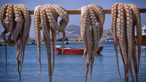 octopus fish greece