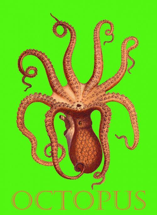 Octopus Vintage Illustration Poster