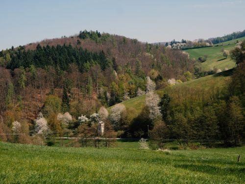 odenwald cultural landscape mixed forest