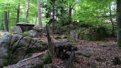 odenwald trail forest
