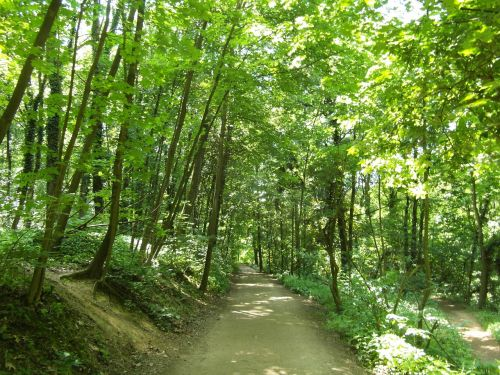 odenwald forest path trail